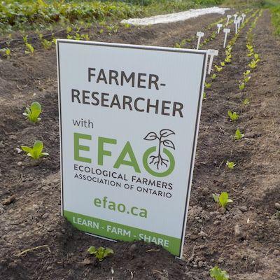 The Rhythm of Farmer-Led Research