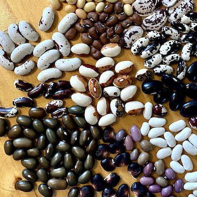 Beans: Breeding & Selecting Specialty Varieties