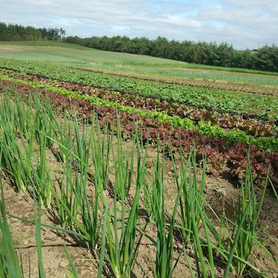 Field Design and Vegetable Crop Planning