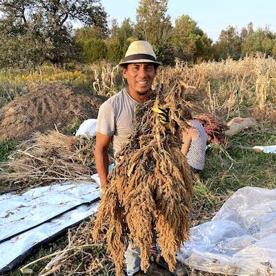 Rony Lec poses with a big amaranth plant he harvested from his research plot
