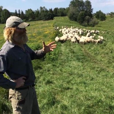 Pasture Management for Sheep at Pasture Hill Farm