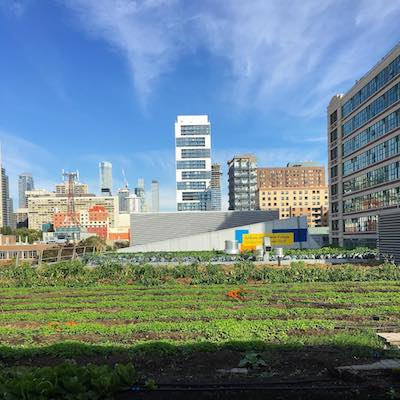 A green rooftop garden grows under a blue sky, with skyscrapers and office buildings in the background