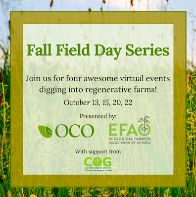 Fall Field Day Series