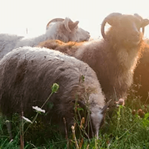 Regenerative Practices with Valleyfield Farm