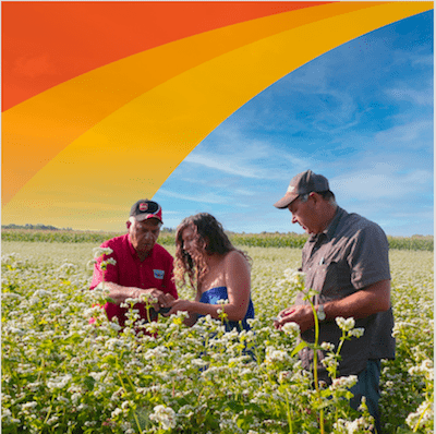 Three people stand in a field of flowering buckwheat under a blue sunny sky. A stylized orange wave runs across the top left of the image.