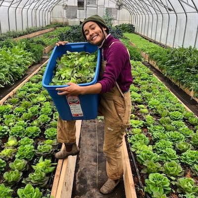 Virtual Field Day: Sundance Harvest