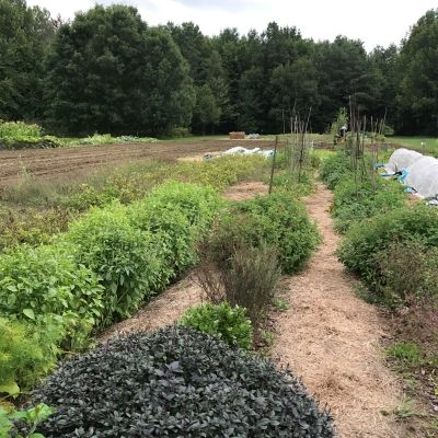 Agroecology and the Future of Our Mother Earth