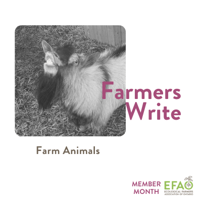 Farmers Write: Farm Animals