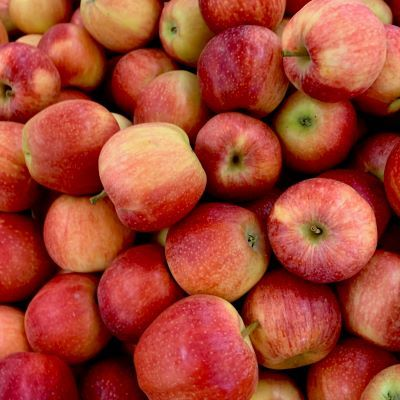 Organic Apple Production at Avalon Orchards