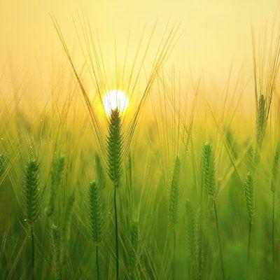 Small Grains Meet-Up: Harvest Drop-In