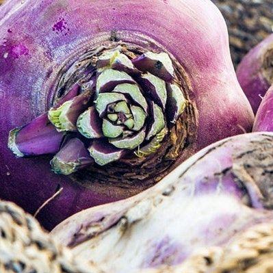 Rutabaga: Learning Biennial Seed Cultivation