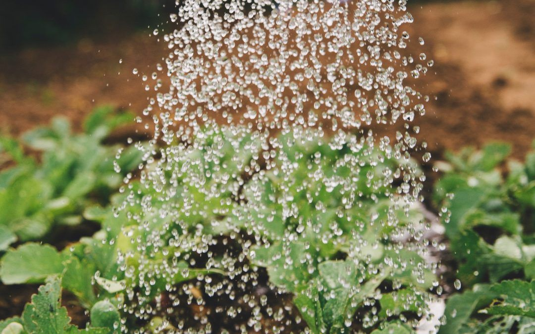 Watering and Irrigation Principles