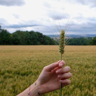 Small Grains Meet-Up: Ask a Certified Crop Advisor